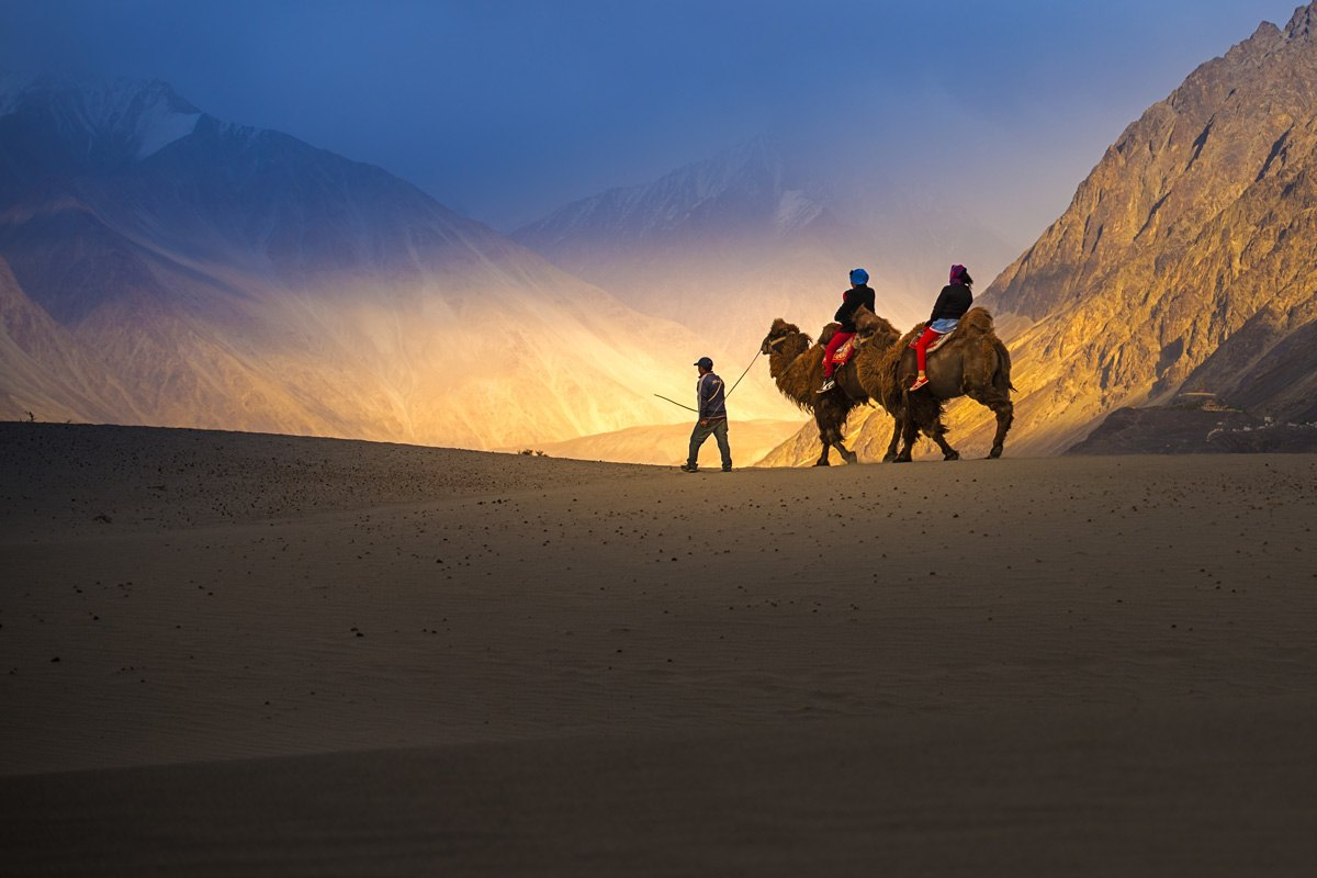 India-Camel-safari-in-Nubra-Valley-Ladakh